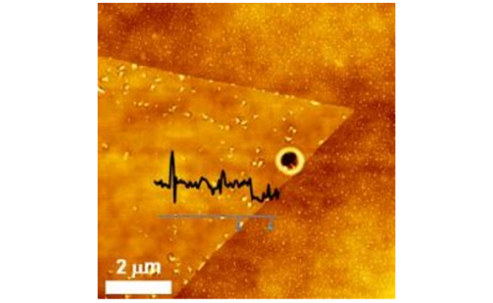 AFM Image of WS2 film